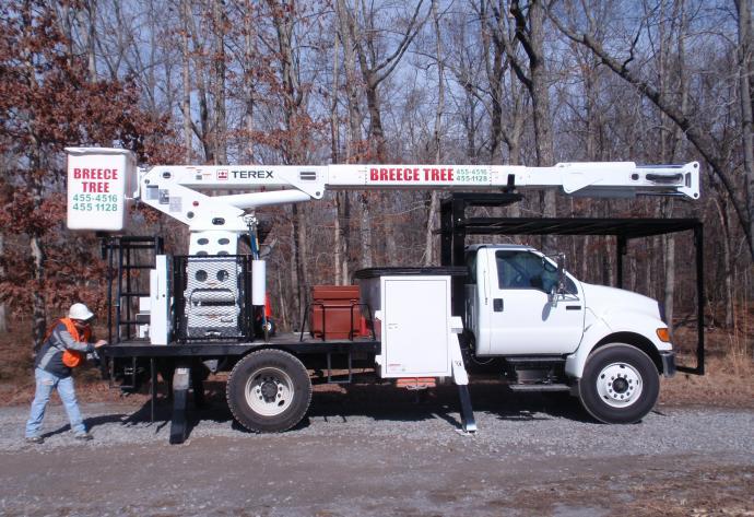 Tree Service Tree Removal Arbor Arborist Stump Grinding
